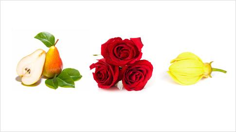 Entre sus notas aromáticas destaca la pera intensa, la rosa fresca cubierta de rocío, las semillas de ambreta y la flor de Ylang-ylang.