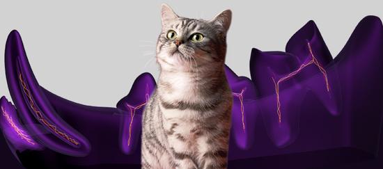 Junto a 2.500 bopkis y sus mascotas descubriremos Whiskas Dentabites, el premio que cuida de la salud dental de nuestros gatos…